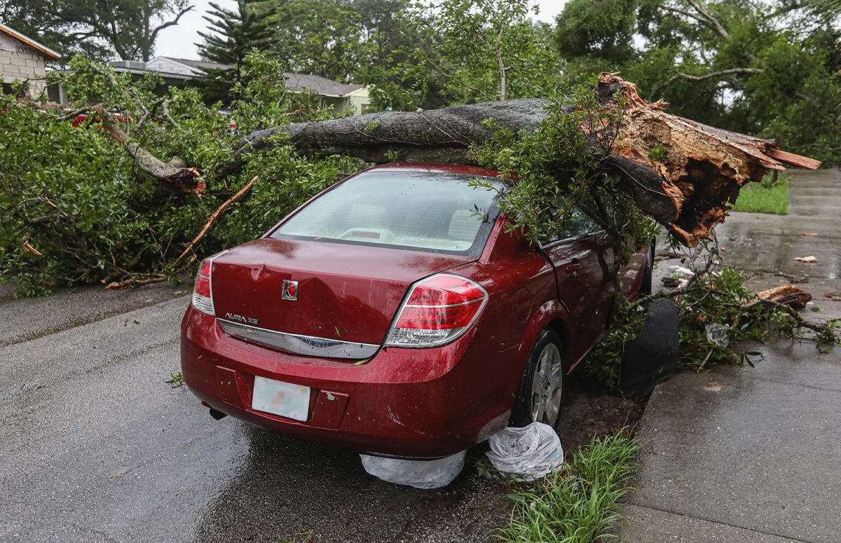 What to do when a tree falls